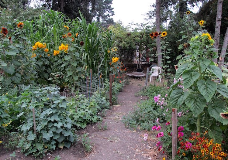 Gardening In Northern California Swallowtail Garden Seeds Blog