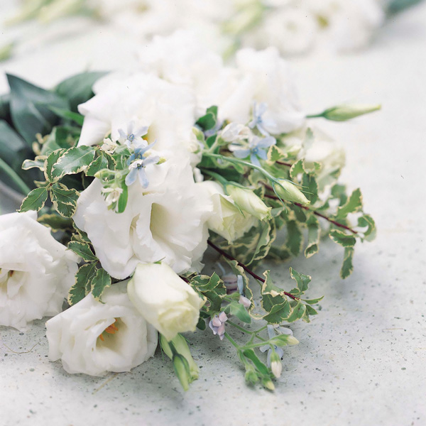 Echo White lisianthus seeds