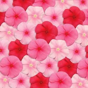 Vinca flowers - Pacifica Lipstick Mix