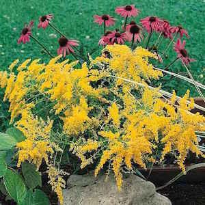 21 Top Cutting Garden Flowers Swallowtail Garden Seeds