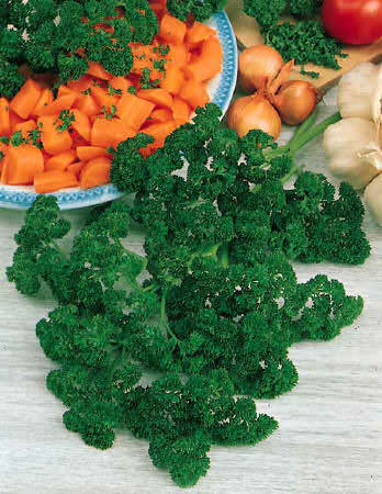 Forest Green organic parsley seeds