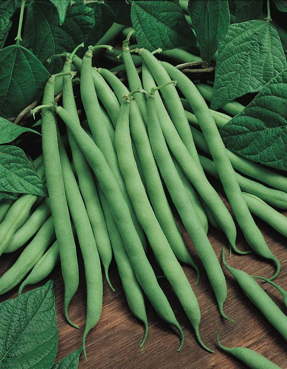 Pole Bean Seeds Vegetable Garden Seeds