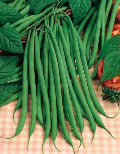 Pole Beans Fortex