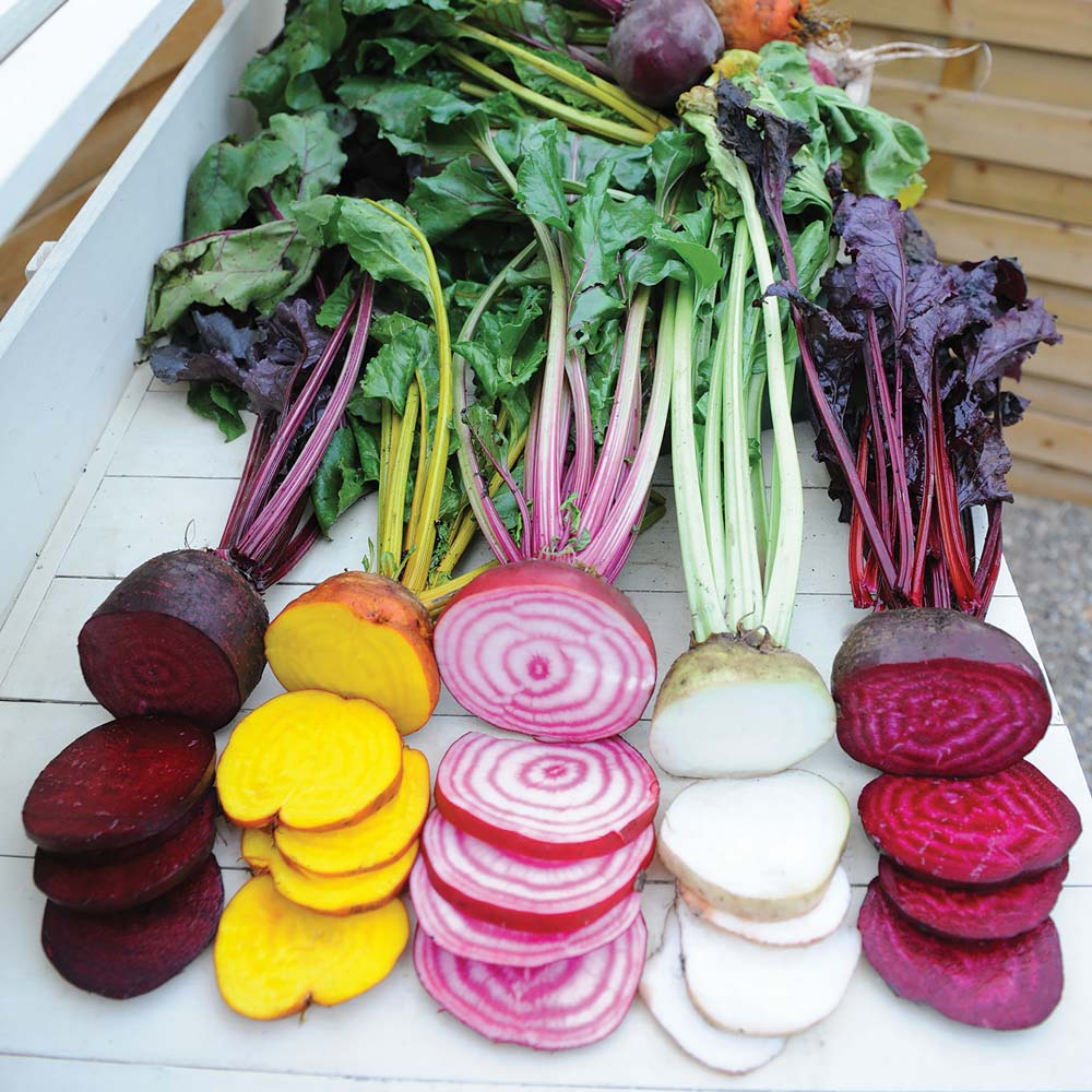 Rainbow Mix beet