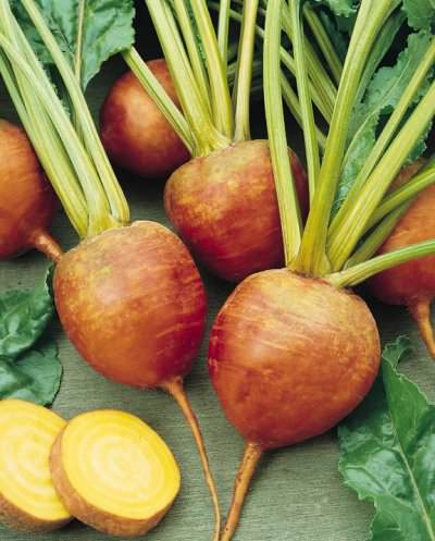 Touchstone Gold organic Beet seeds