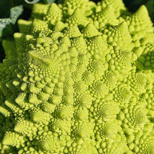 Romanesco broccoli has neat spriraled heads