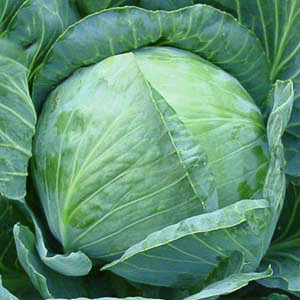 Cabbage Golden Acre - organic seeds
