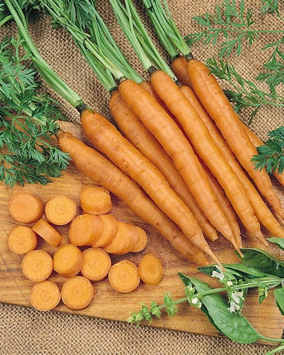 Carrot Mokum