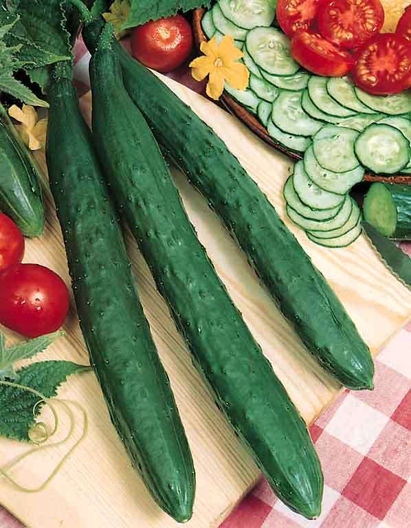 how to make cucumber seeds