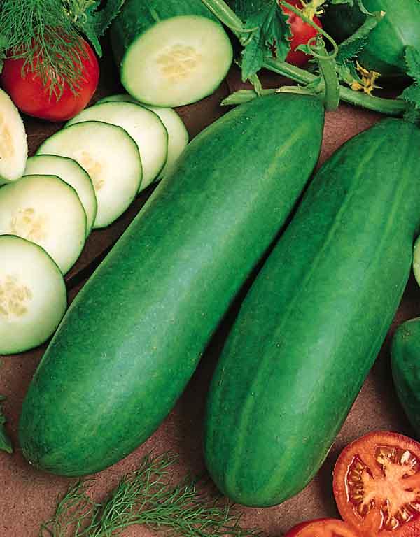 Tendergreen Burpless cucumbers