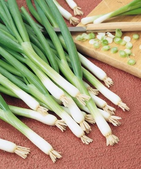 Onion Evergreen White Bunching
