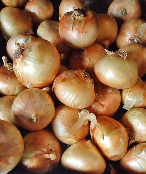 Texas 1015Y organic onion