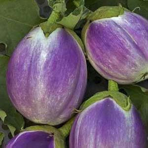 Rosa Bianca eggplant - organic seeds