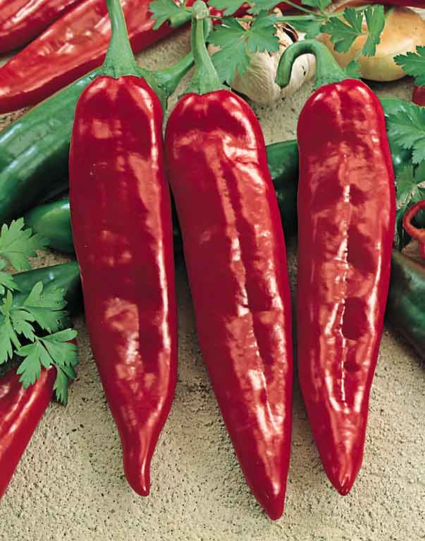 Pepper Anaheim Numex Joe E. Parker - hot peppers
