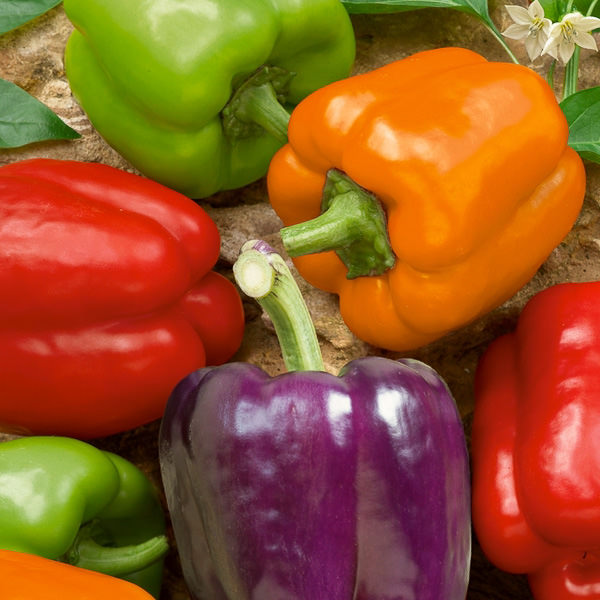 Bell pepper Hybrid Mix