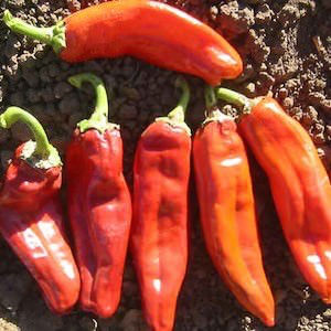 Pepper Big Jim - hot peppers