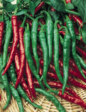 Pepper Cayenne Long Red Slim - hot peppers