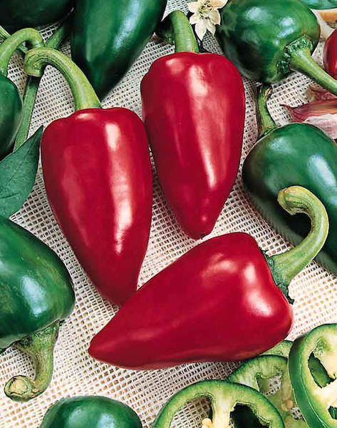 Peppers Lipstick pimento sweet pepper