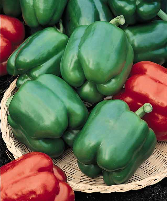 Blocky, thick walled Yolo Wonder bell peppers