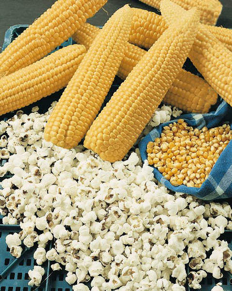 Popcorn Robust Hybrid