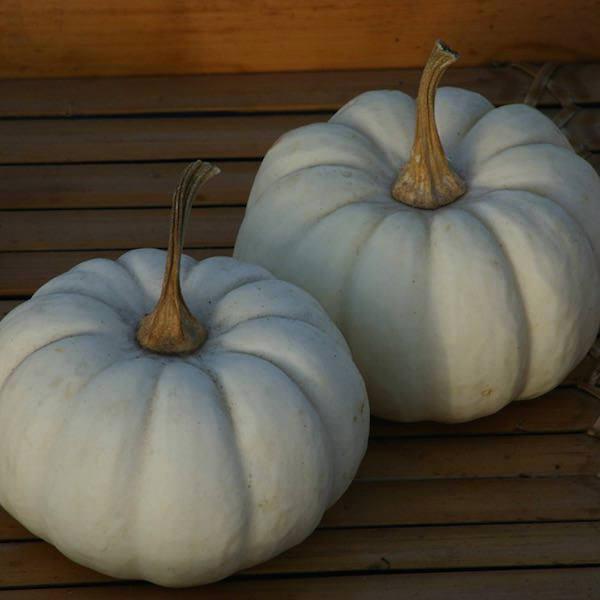 Pumpkin Baby Boo