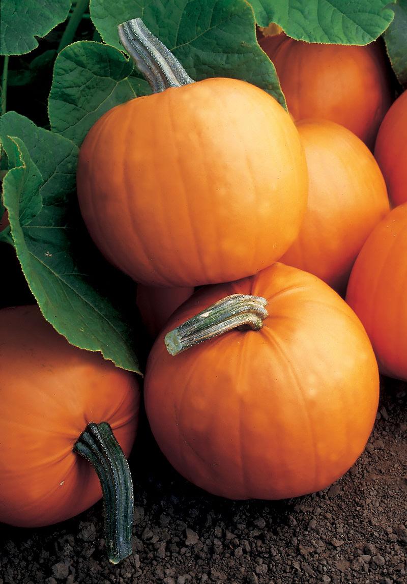 Pumpkin Orange Smoothie