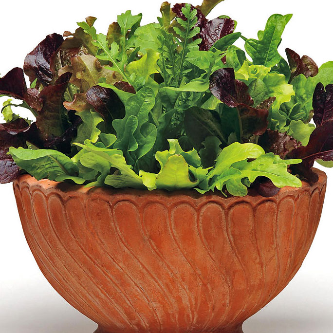 Simply Salad Alfresco Mix