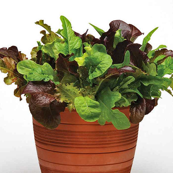 Simply Salad City Garden Mix