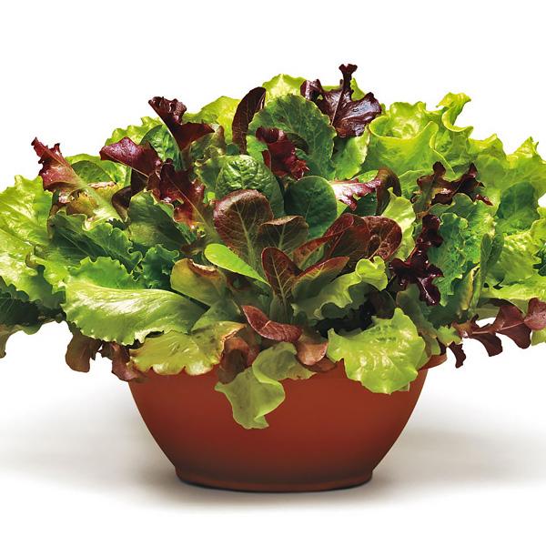 Simply Salad Summer Picnic Mix