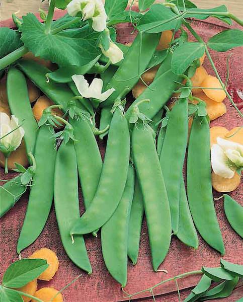 Peas, Oregon Giant