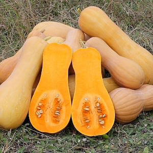 Winter squash - Waltham Butternut - organically grown seeds