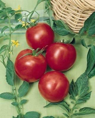 Arkansas Traveler heirloom tomato