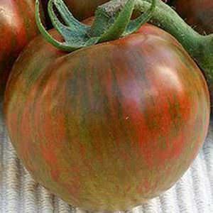 Black Zebra heirloom tomato