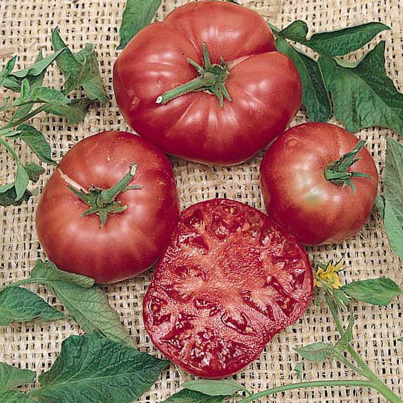 Tomato Brandywine Pink - heirloom tomatoes