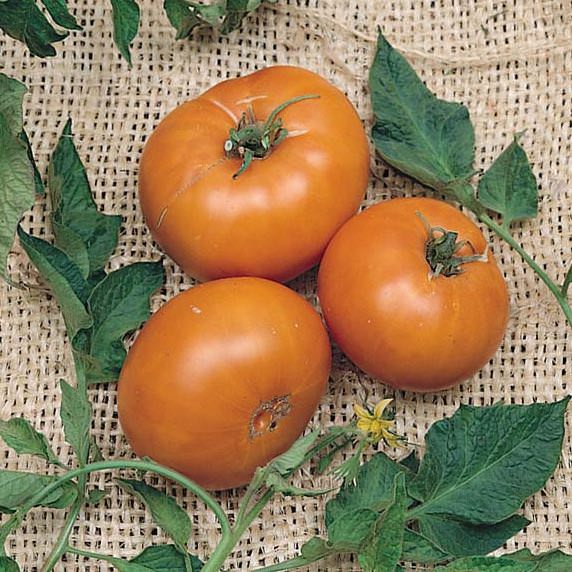 Tomato Brandywine Yellow - heirloom tomatoes