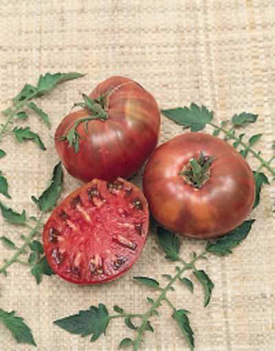 Tomato Cherokee Purple organic - heirloom tomatoes