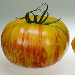 Tomato Copia - heirloom tomatoes