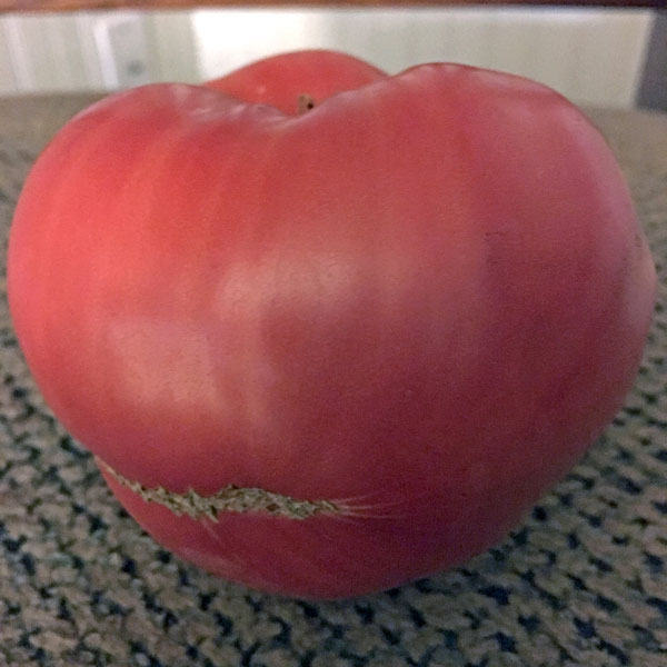 German Giant heirloom tomato seeds