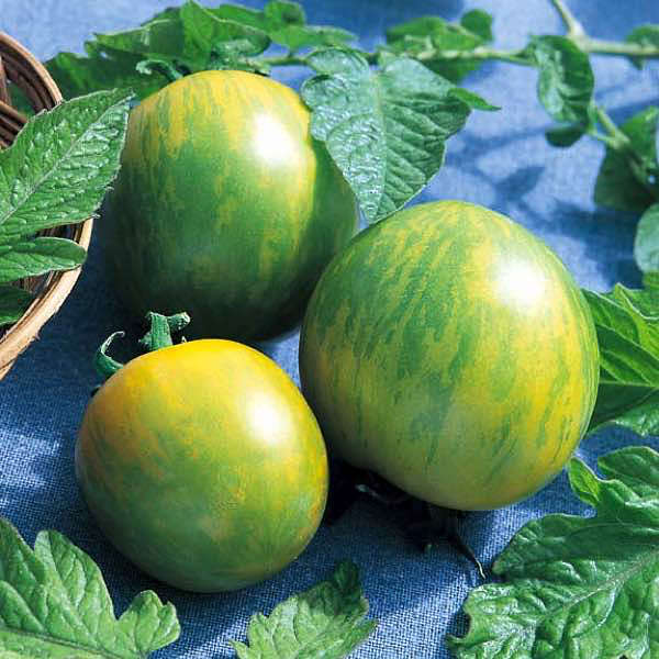 Tomato Green Zebra organic - heirloom tomatoes