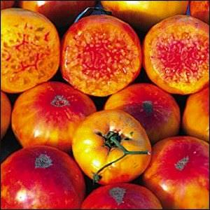 Tomato Hillbilly - heirloom tomatoes