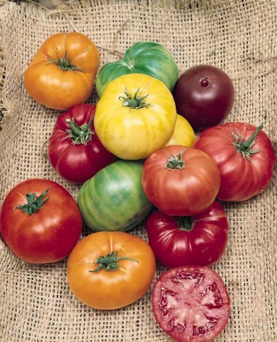 Tomato Lynn's Beefsteak Mix - heirloom tomatoes