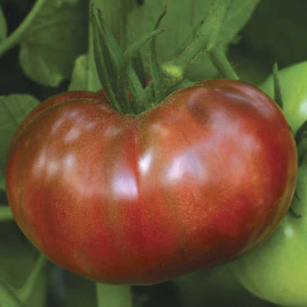 Tomato Heirloom Marriage Cherokee Carbon