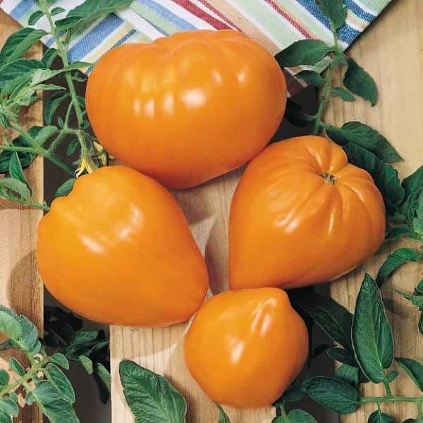 Orange Strawberry heirloom tomato