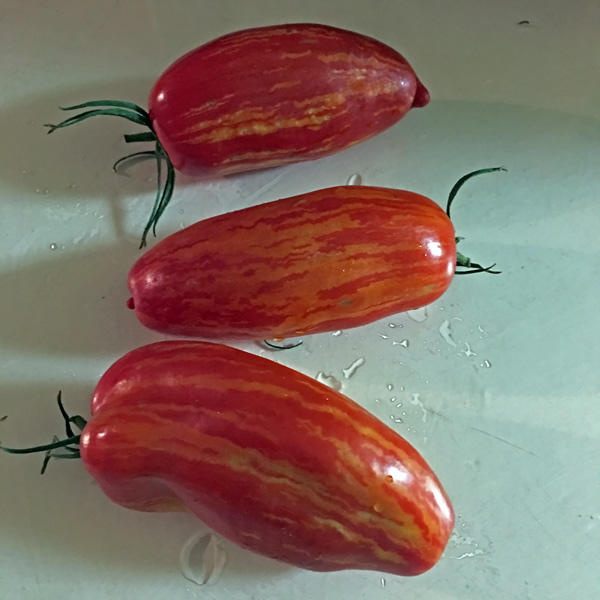 Speckled Roman heirloom tomato seeds