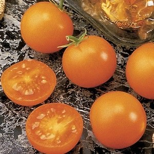 Tomato Sunsugar - cherry tomatoes