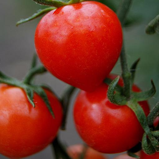 Sweet Valentines cherry tomato