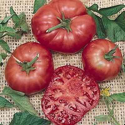 Solanum lycopersicum, Lycopersicon esculentum