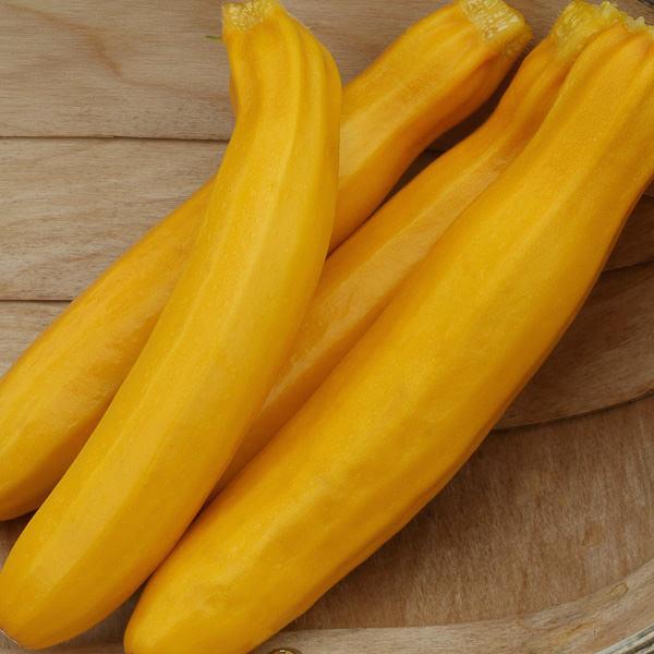 Buckingham Patio Zucchini squash