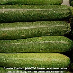 Zucchini squash - Dark Green