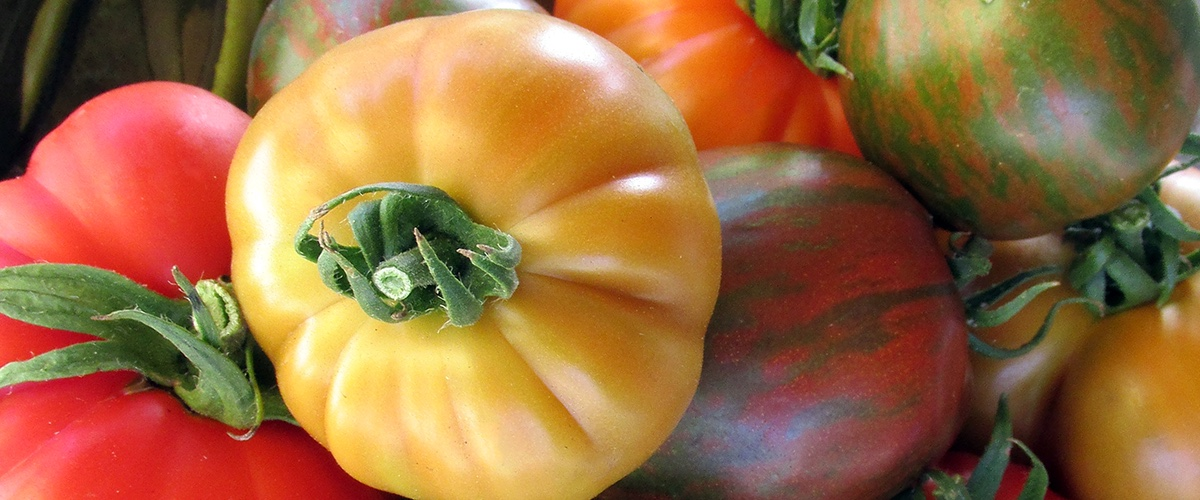 Vegetable Seeds - Heirloom Tomatoes